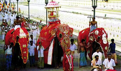 Kandy Perahera For 17 Countries Via Live Sat Cast Lanka Page